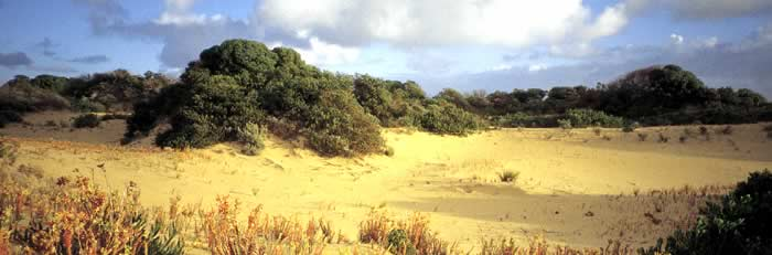 Dunes of the Coorong at the 42 mile crossing